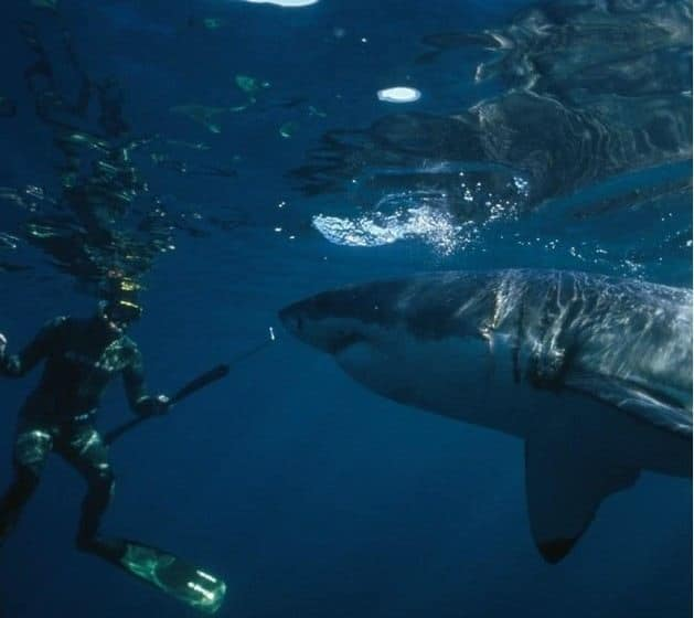 Shark Shield Freedom7 Shark Repellent - Spearfishing