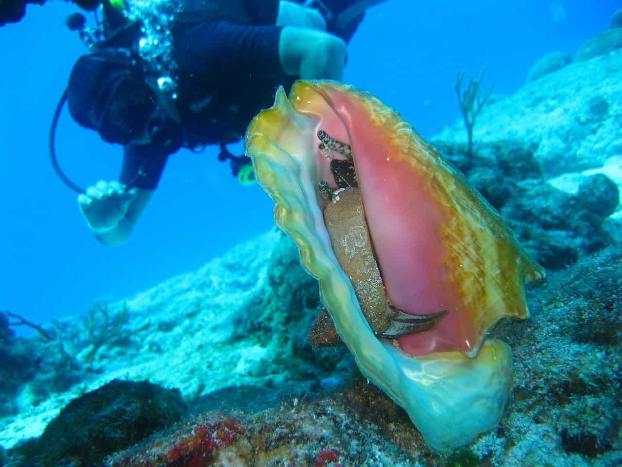 Scuba Diving - Hidden Gems