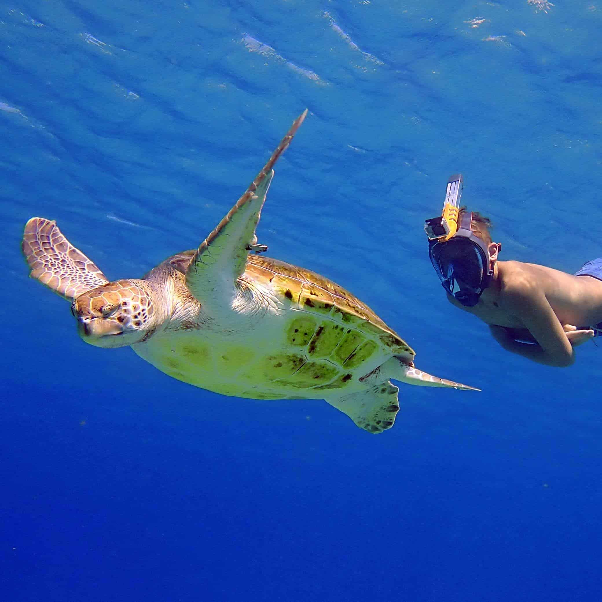 Ocean Reef Group - Aria Antracite (Black) with turtle
