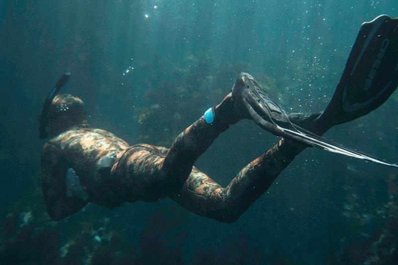 Sharkbanz Midnight Bimini Dive Spearfish